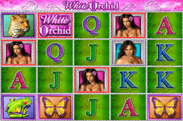 White Orchid has a 5x4 grid layout