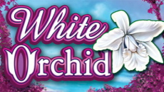 White Orchid does not have clear storyline